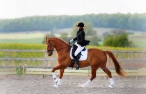 konnyy-sport-horse-naezdnica