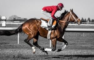 horse-race-jockey