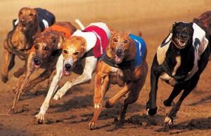dog_run